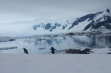 南极游第四天--登陆YALOUR ISLAND