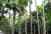 三亚 亚龙湾热带天堂森林公园 门票200,儿童半票100 绿树成荫,基本晒不到太阳