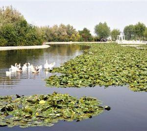 青山公园旅游景点攻略图