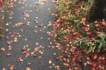 秋天、枫叶、温泉乡