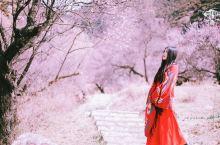这里是西藏的江南,3月即将花开成海,不看悔一年!