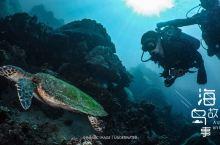 今天看到大海龟了哈哈