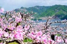 苏州惊现绝世桃源!泛舟赏湖、十里桃花...风景美到爆!
