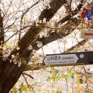 山科疏水旅游景点攻略图
