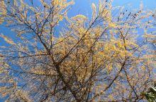 重庆+四川十日游——中国最美的秋天