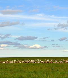 [额尔古纳游记图片] 过一个25℃的夏天!呼伦贝尔大草原风景如画