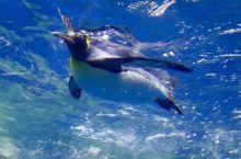 新西兰奥克兰凯利塔顿海洋生物水族馆体验之旅
