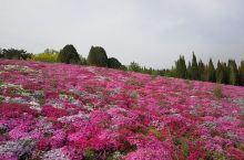"""""""色彩斑斓,花团锦簇的五月,浪漫滨城行——英歌石植物园"""""""