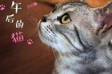 在汕头竟然有一家萌到哭的猫咪咖啡馆,喵星人绝对不能错过!!