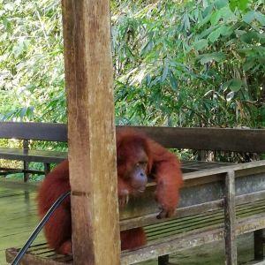 实蒙谷野生动物护育中心旅游景点攻略图