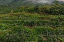 这大山下的瓜菜都想吃了还带走