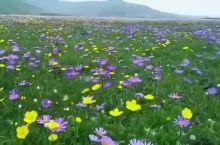 夏天的若尔盖大草原
