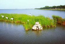 大安湿地景观1日游