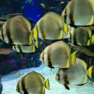 瑞普利水族馆旅游景点攻略图