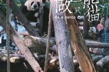 """国庆玩乐  去动物园""""拐""""一只熊猫吧🐼"""