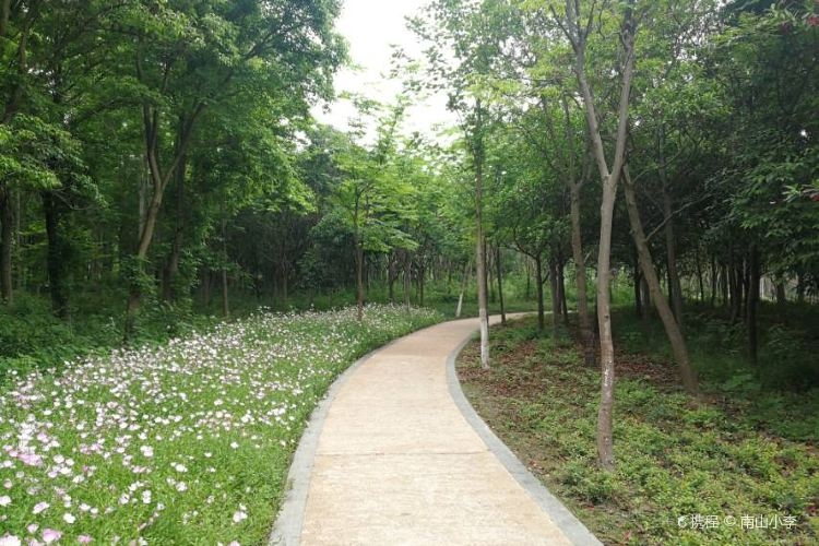 Urban Ecological Forest Park1