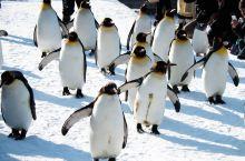 全球10大动物园