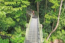 全球5大森林景观