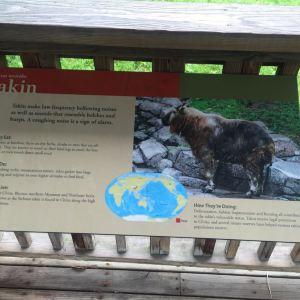 多伦多动物园旅游景点攻略图