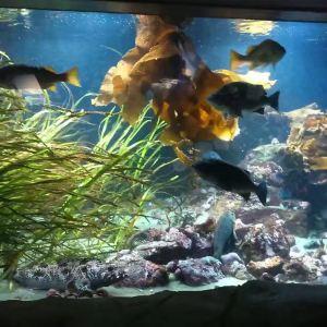 温哥华水族馆旅游景点攻略图