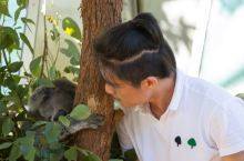 打卡 悉尼塔龙加动物园,与考拉合影