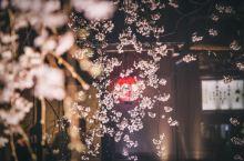 最美京都夜樱--白川