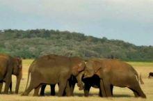 在斯里兰卡,看大象打架,海豚玩耍