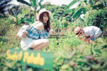 新加坡超超超冷门但好玩,宝莱坞蔬菜农场