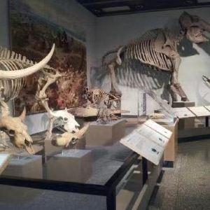 艾伯塔皇家博物馆旅游景点攻略图