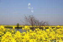 #向往的生活#千垛油菜花,人在花中游