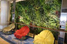 花园酒店看风景