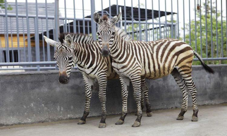 Feizhou Zoo4