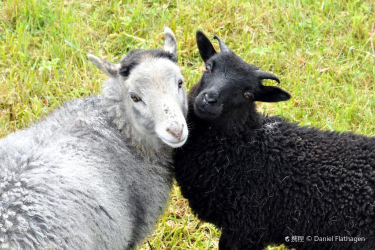 衝浪山羊農場2
