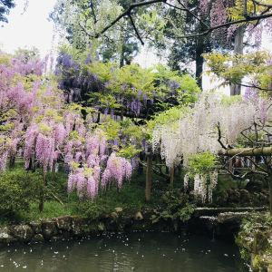 万叶植物园旅游景点攻略图