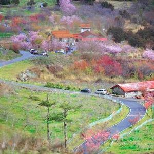 武陵农场旅游景点攻略图