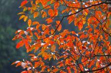 立冬梵净山,秋色红叶满山坡