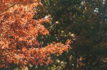 日本九州秘境赏枫之旅