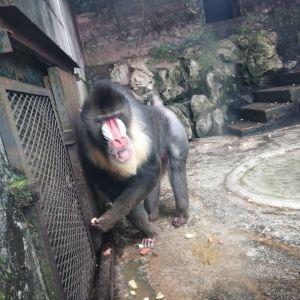 重庆动物园旅游景点攻略图