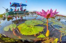 世界自然植物奇观,泰国乌隆壮观的万亩红莲花海奇景,只冬季限定