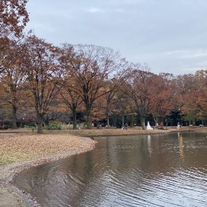 代代木公园旅游景点攻略图