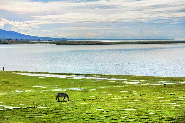 青海湖仙女灣