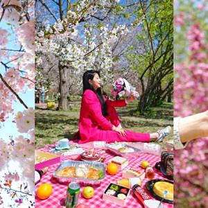 大连游记图文-再也不会有这样奢侈的一年,肆无忌惮沉迷于家乡的春天。(大连赏樱攻略)