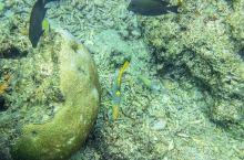 无可比拟的骇德威岛魅力水下世界