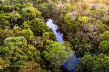 世纪穿越,亿年古老原始雨林探秘