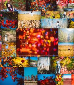 [本溪游记图片] 【時光日誌】盘锦 本溪 · 河蟹、枫叶和棉花糖的世界
