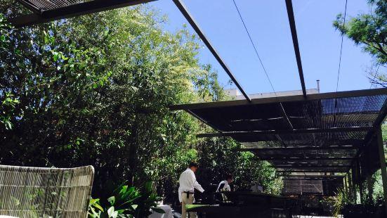 Mimosa Garden