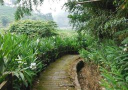 野姜花溪步道