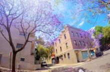 美哭!一场紫色雨席卷澳洲,让全世界嫉妒!