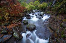 望天鹅|秋雨中的美艳画卷