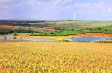 """红土地上的最美田园——""""菠萝的海""""#向往的生活"""